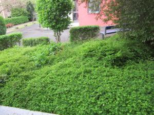 Wiesbaden_engagiert_1